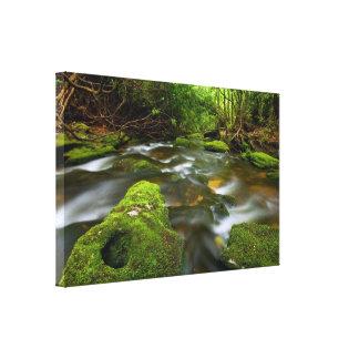 Lush Rain Forest Stream Stretched Canvas Print