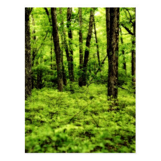 Lush Summer Woods Post Cards