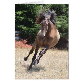 Lusitano Horse at Liberty Card