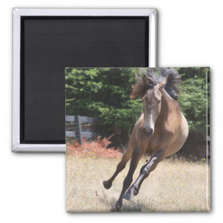 Lusitano Horse at Liberty Magnets