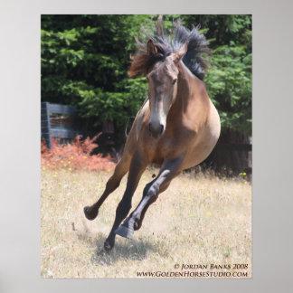 Lusitano Horse at Liberty Poster