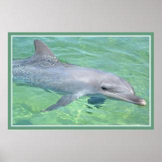 lustre del premio de la impresión del delfín posters