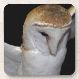 Luther- Common Barn Owl III Beverage Coaster