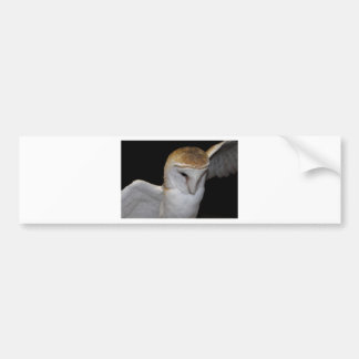 Luther- Common Barn Owl III Bumper Sticker