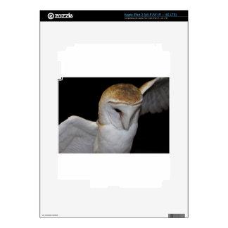 Luther- Common Barn Owl III iPad 3 Decals