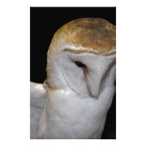 Luther- Common Barn Owl III Stationery