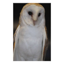 Luther- Common Barn Owl IV Stationery