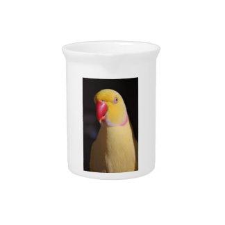 Lutino Indian Ringneck Parakeet Beak Beverage Pitchers
