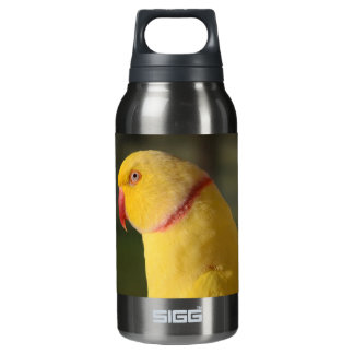 Lutino Indian Ringneck Parakeet Eye 10 Oz Insulated SIGG Thermos Water Bottle