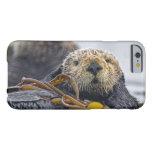 Lutris lindos del Enhydra de la nutria de mar de Funda De iPhone 6 Barely There