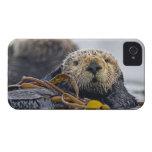 Lutris lindos del Enhydra de la nutria de mar de iPhone 4 Carcasas