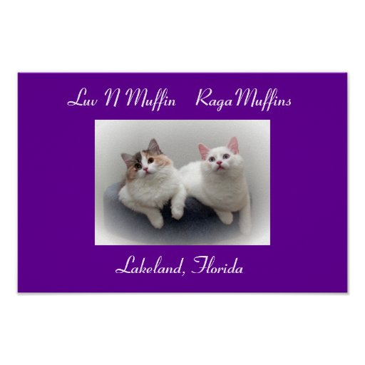 Luv N Muffin RagaMuffin Cats & Kittens Poster