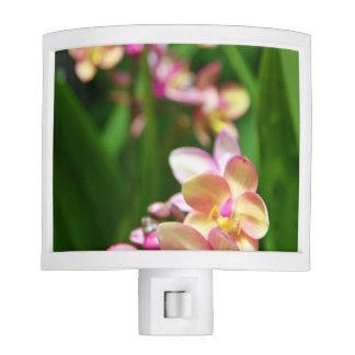 Luz de la noche del Orchidaceae