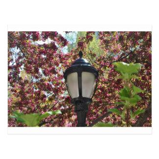 luz de la primavera postal