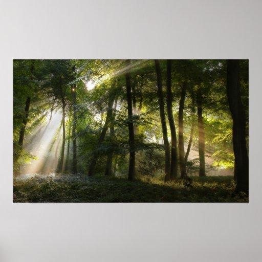 Luz del arbolado de la mañana poster