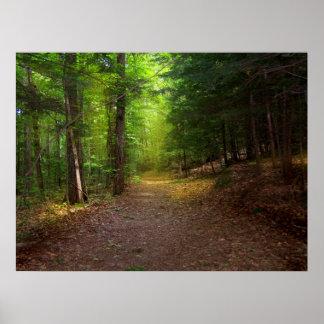 Luz del bosque impresiones