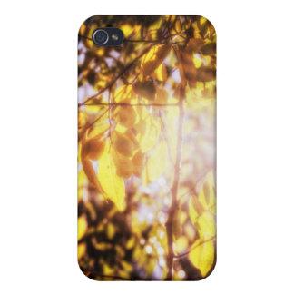 Luz del otoño iPhone 4/4S fundas
