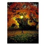 Luz del otoño tarjetas postales