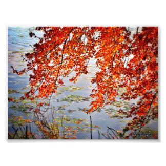 Luz del sol #2 del otoño fotografía