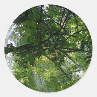 Luz del sol a través de árboles pegatina redonda