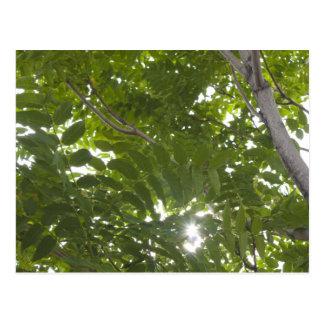 Luz del sol a través de las hojas del árbol del ci postales