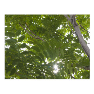 Luz del sol a través de las hojas del árbol del postal