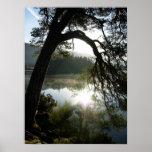 Luz del sol a través de los pinos en Keswick Posters