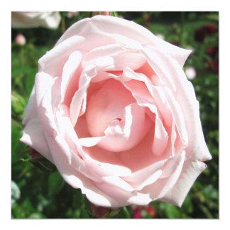 """Luz del sol color de rosa de la abertura invitación 5.25"""" x 5.25"""""""