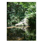 Luz del sol de la tarde en el río de los alces en  tarjeta postal
