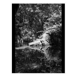Luz del sol de la tarde en el río de los alces en  postal