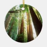 Luz del sol del verano de los árboles de la adorno para reyes