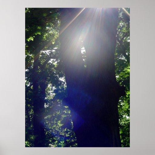 Luz del sol en el bosque impresiones