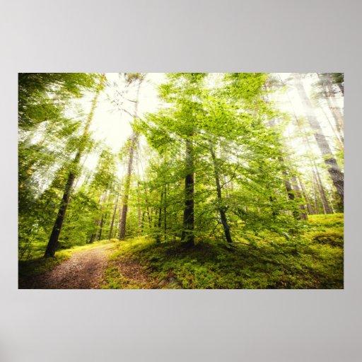 Luz del sol en el bosque póster