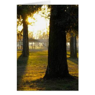 Luz del sol en los árboles tarjeta de felicitación
