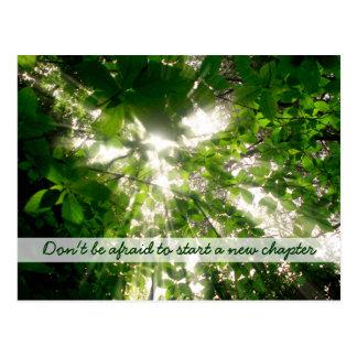 Luz del sol que fluye a través de árboles de las h postal