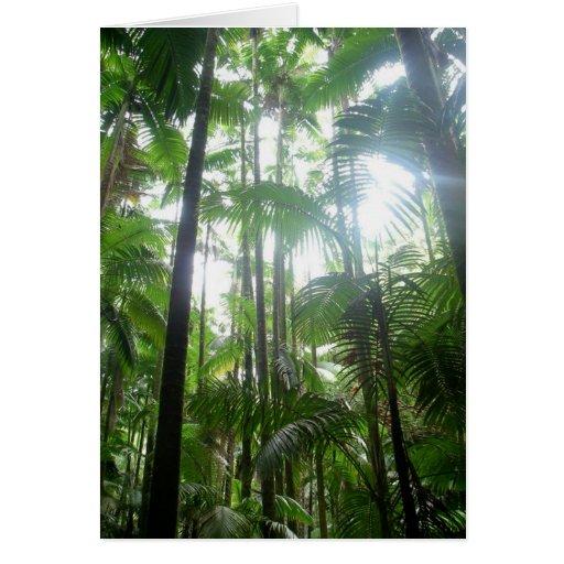Luz del sol y sombras en la selva tarjetas