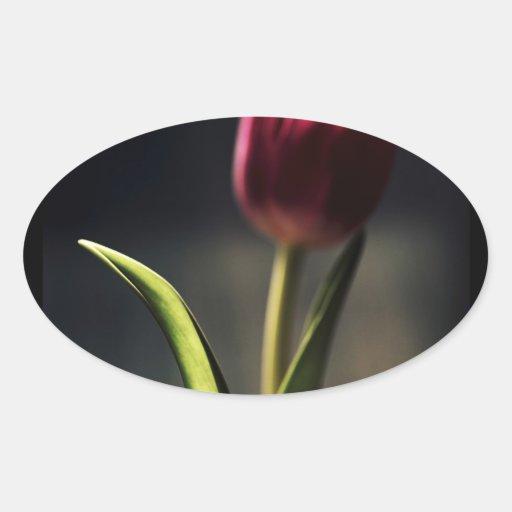 Luz del Viejo Mundo, tronco del tulipán, Calcomania De Oval