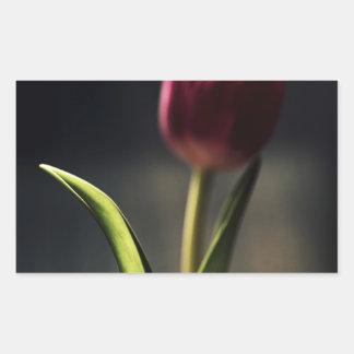 Luz del Viejo Mundo, tronco del tulipán, Pegatina Rectangular