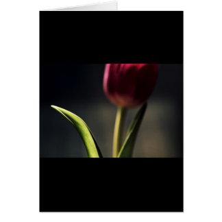 Luz del Viejo Mundo, tronco del tulipán, Tarjeta De Felicitación