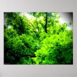 Luz en el árbol impresiones