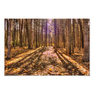 Luz en el bosque fotografía