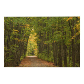 Luz en el extremo de un túnel de árboles impresión en madera
