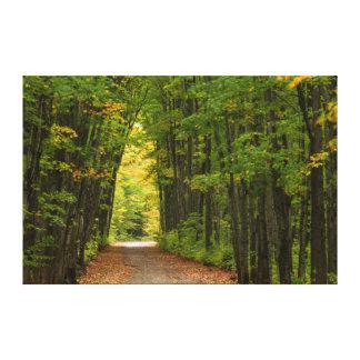 Luz en el extremo de un túnel de árboles lona estirada galerías