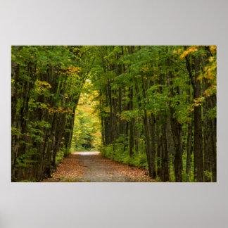Luz en el extremo de un túnel de árboles póster