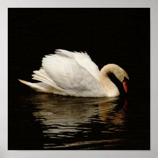 Luz en la impresión oscura del cisne tan bonita póster
