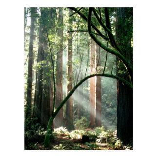 Luz en las maderas postal