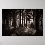 Luz que brilla a través de un bosque oscuro posters