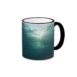 Luz que brilla en el arrecife de coral y la escuel tazas de café