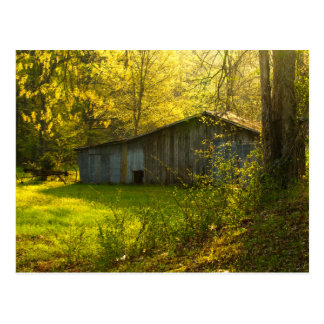 Luz rural de la mañana de la primavera de postales