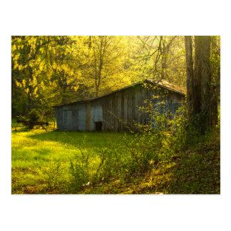 Luz rural de la mañana de la primavera de Tennesse Postales